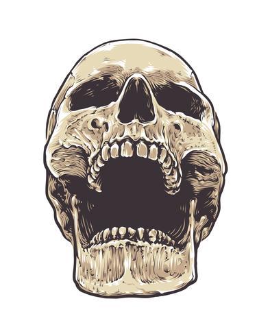 Cráneo anatómico de grunge