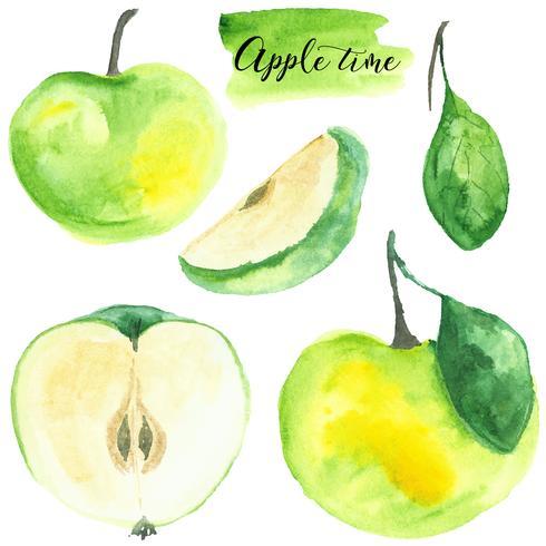 Ställ äpple. Akvarell illustration. Mat. Isolerat. Naturlig, organisk. Frukt. Grön, gul, brun. Vektor.