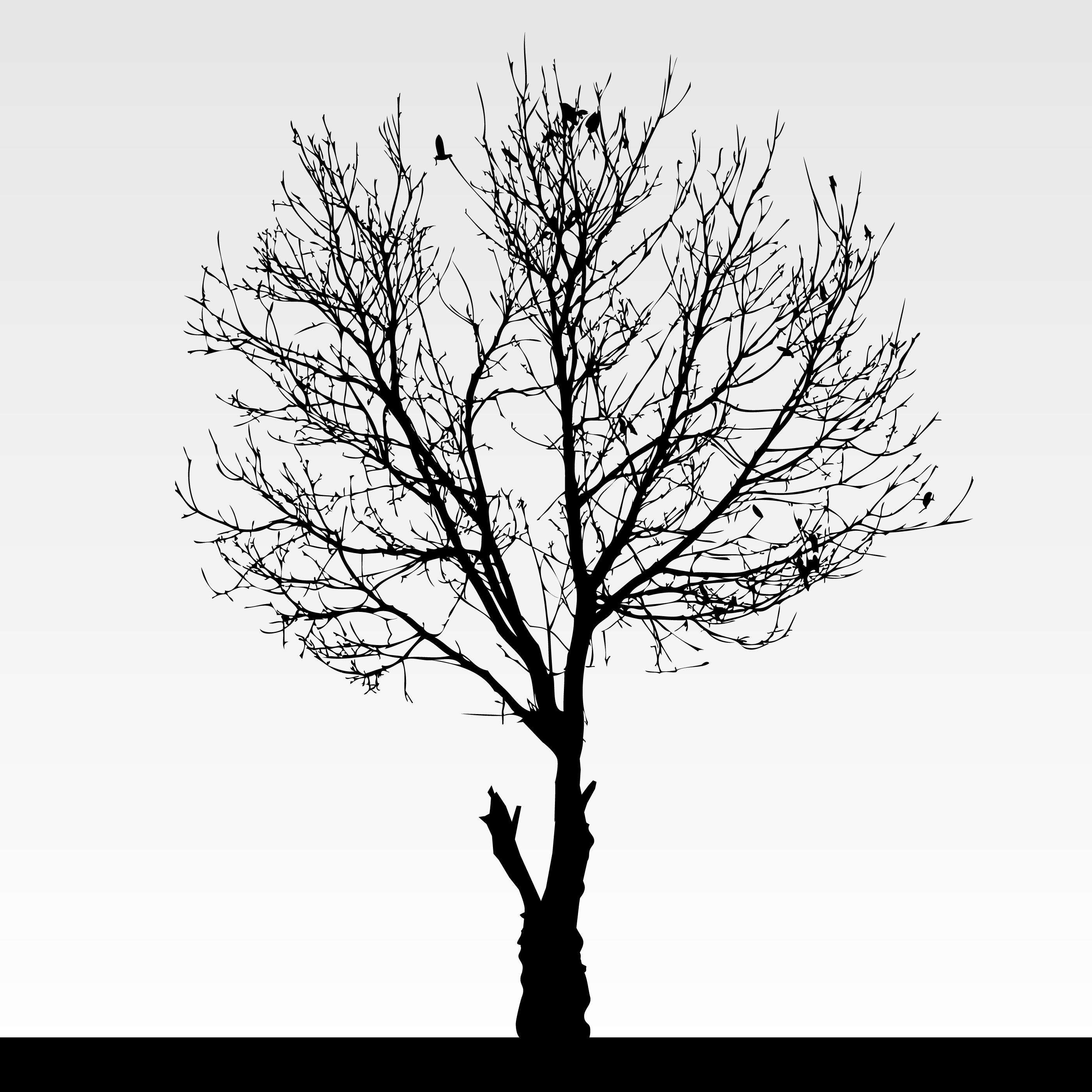 Dry Dead Tree Silhouette. 340787