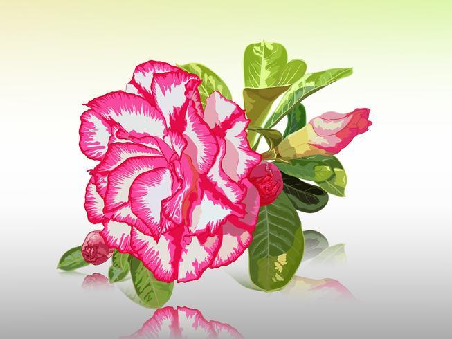 Lirio del impala, rosa del desierto, azalea simulada, pinkbignonia, flor de adenium vector