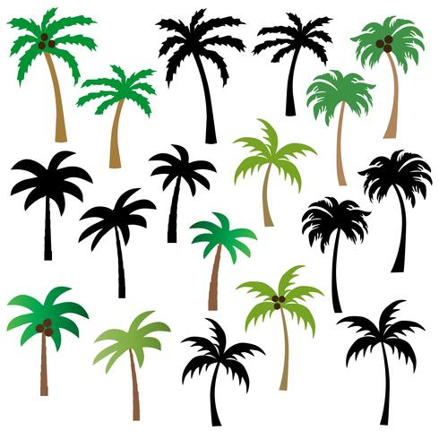 palm trees graphics vector