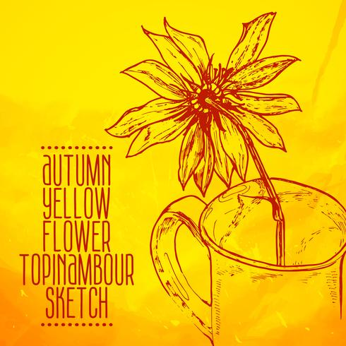 hand drawn yellow flower topinambour sketch