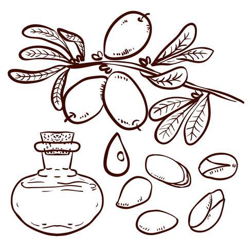 Conjunto de óleo de argan