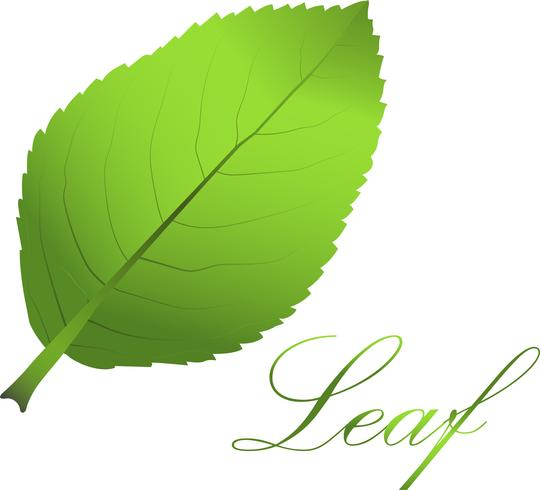 Leaf - Download Free Vector Art, Stock Graphics & Images