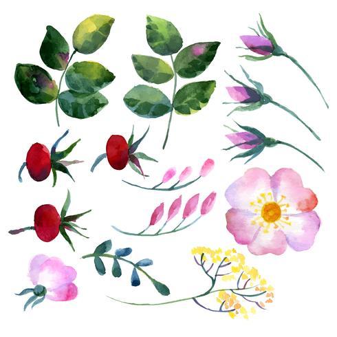 Conjunto de elementos em aquarela rosa mosqueta