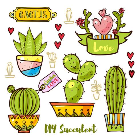 Cacti and succulents in pots.  vector