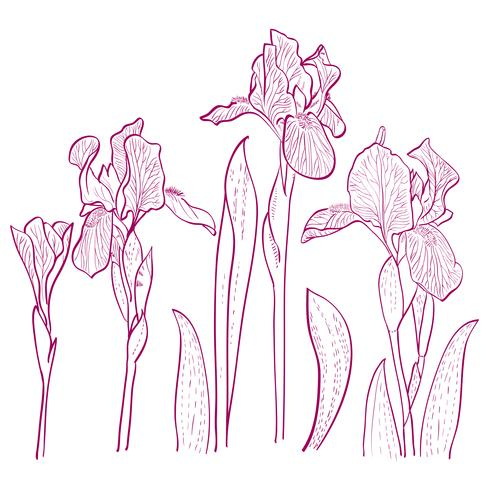 iris for greeting card. vector