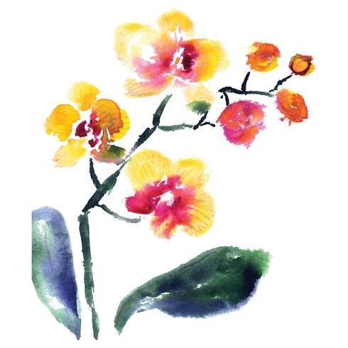 orchidée jaune isolée on white