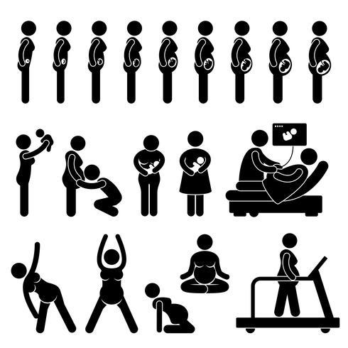 Embarazo Embarazo Etapas Proceso Desarrollo prenatal Madre Bebé Ejercicio Figura de palo Icono de pictograma.