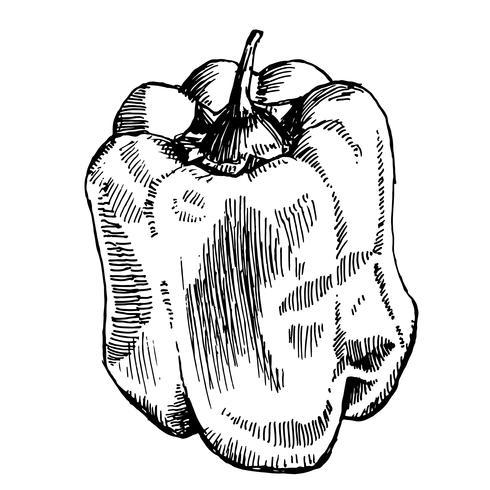 esboço de pimenta doce