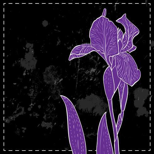 iris for greeting card.