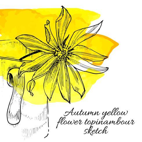 handritad gul blomma topinambour skiss vektor