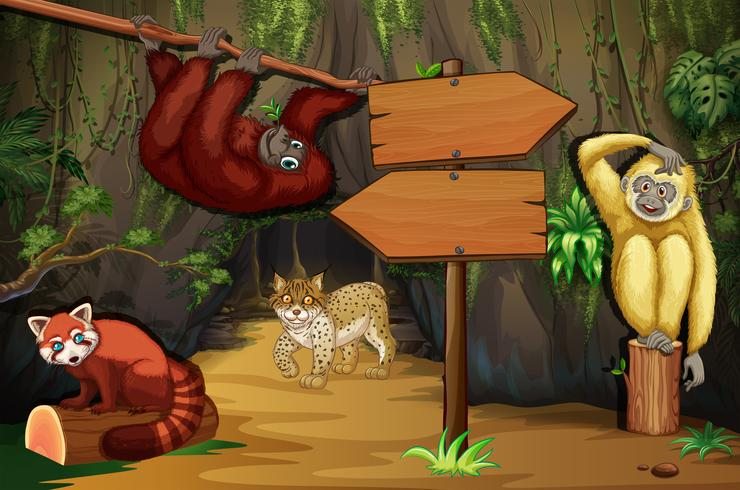 Animais selvagens na caverna