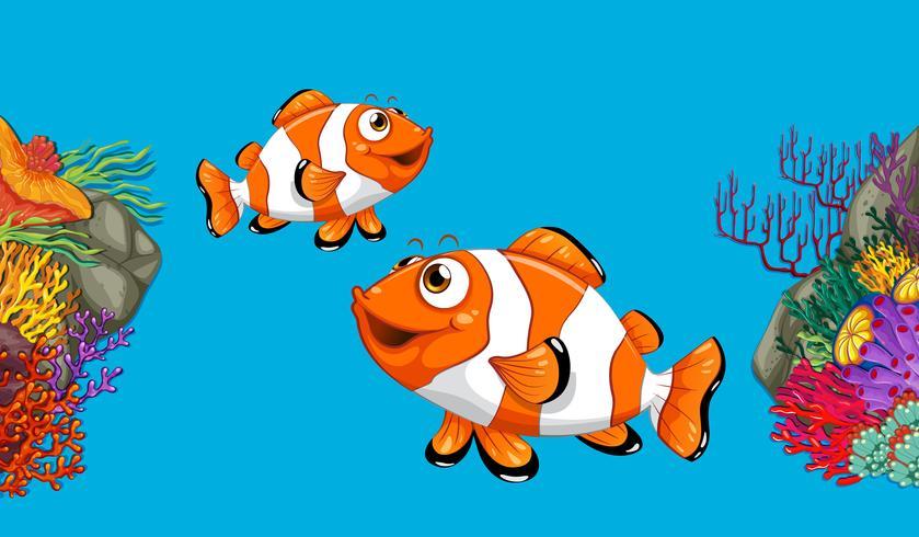 Twee clownfish die in oceaan zwemt