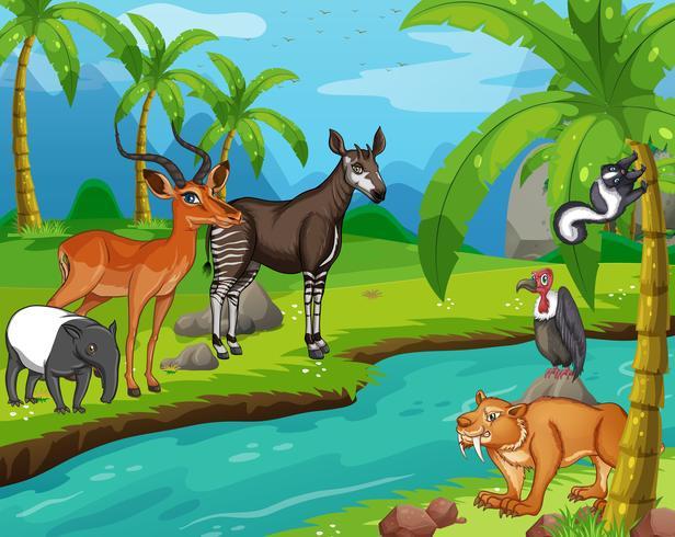 Vilda djur som står vid floden