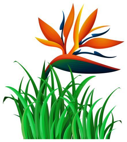 Bird of paradise flower in the bush
