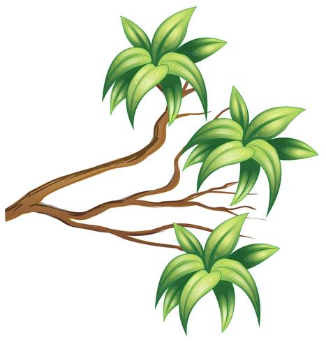 Trägren med gröna blad