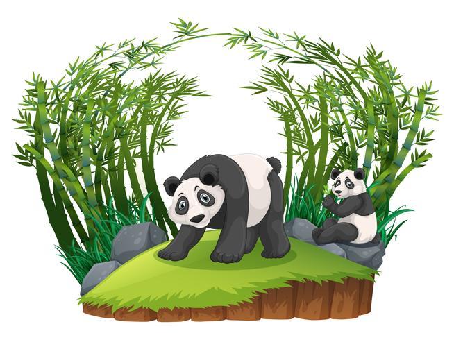 Twee panda's in bamboebos vector