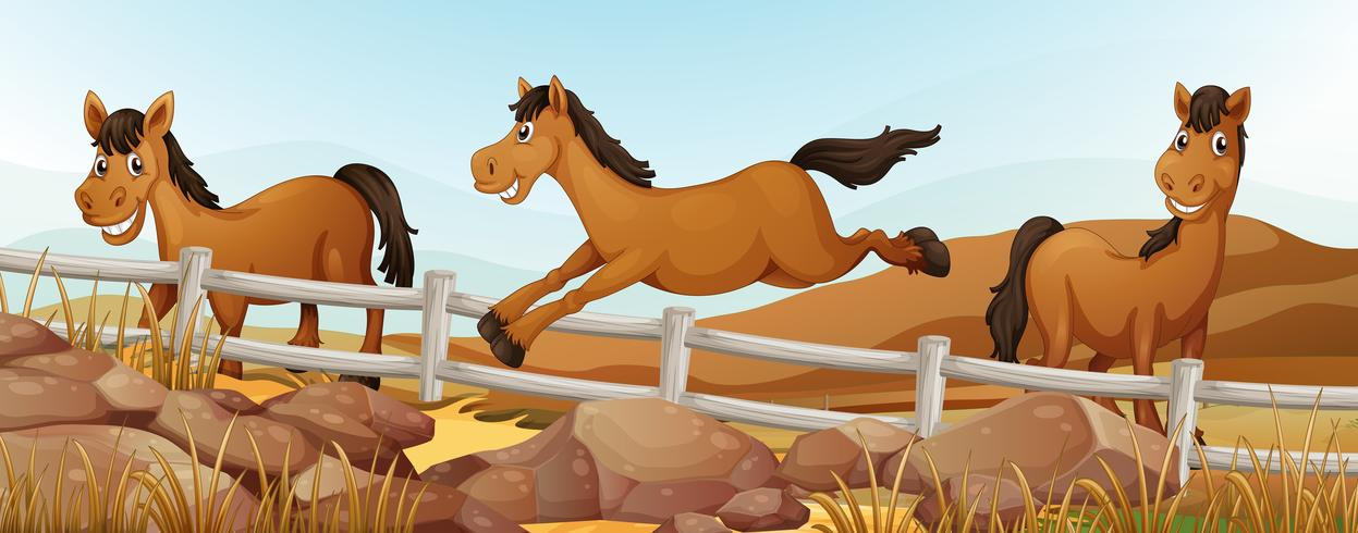 Drei Pferde auf dem Feld