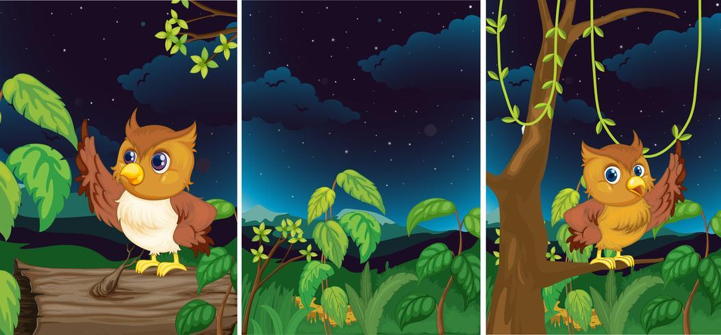 Skogscener med söta ugglor