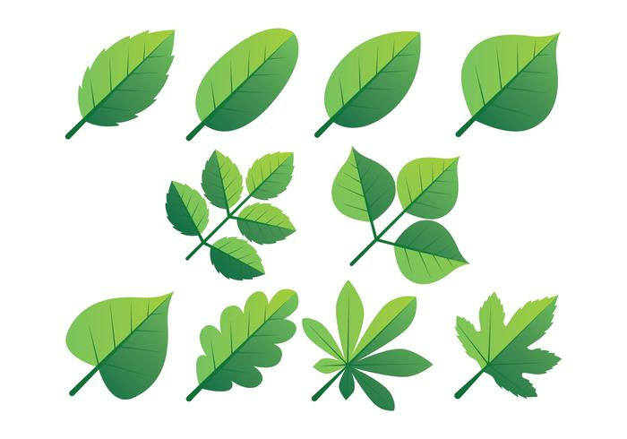 Green Leaves Clipart Set Download Free Vector Art Stock Graphics