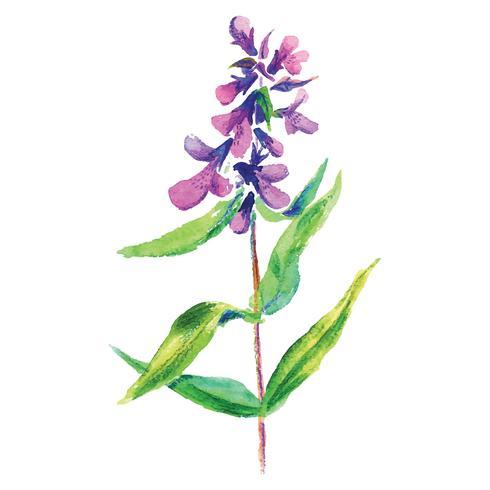 Lilac flower floral