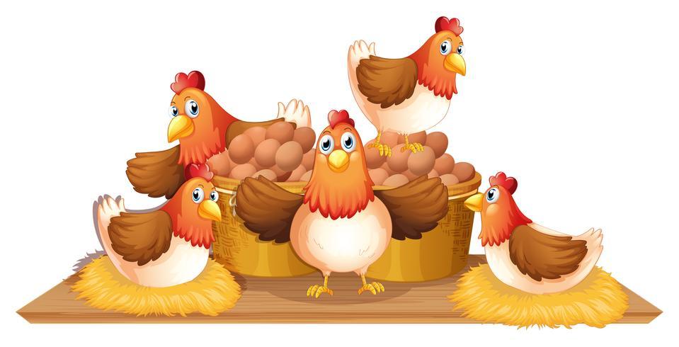 Pollos y huevos en canasta.