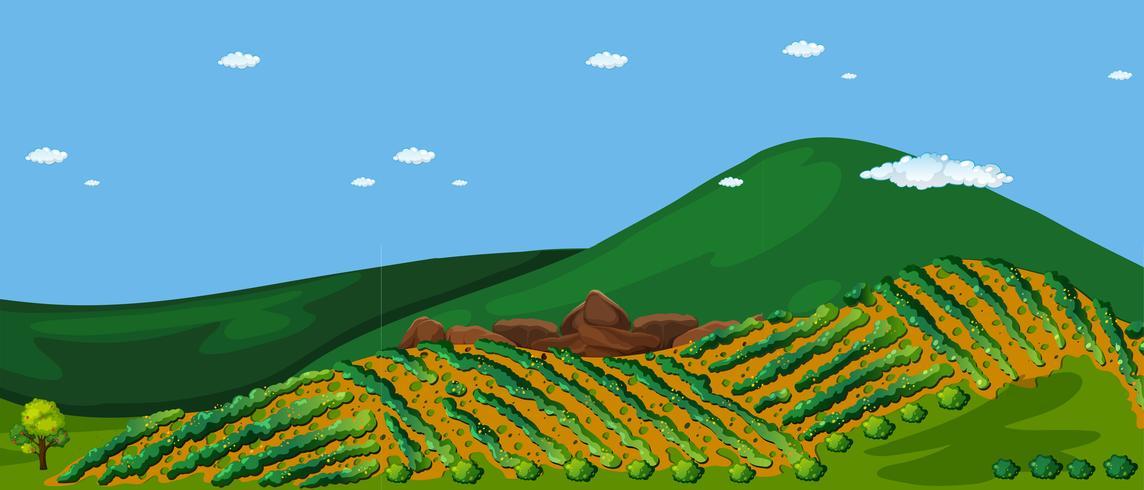 Terras Landbouwtechniek bij Hill