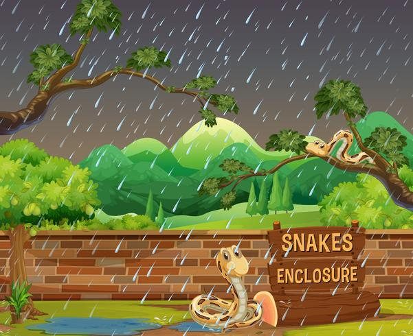 Zoo scene with snakes in the rain