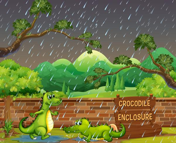 Dos cocodrilos en la lluvia