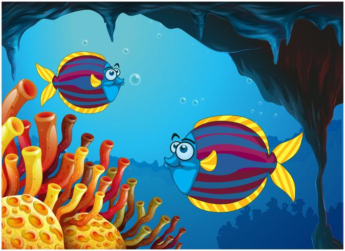 Two colorful fishes inside the cave under the sea