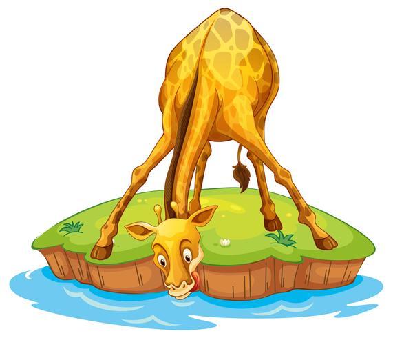 Girafa na ilha bebendo vetor