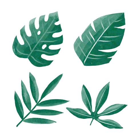 Wasserfarbe-tropisches Grün verlässt Clipart-gesetzten Vektor