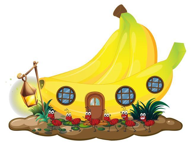 Casa de banana com formigas vermelhas marchando lá fora vetor