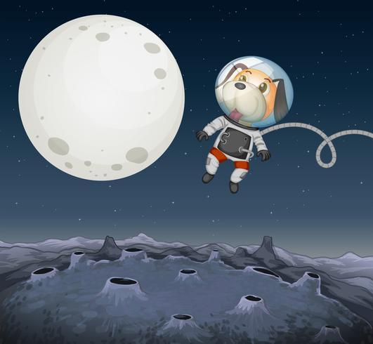 Een hond die in de ruimte onderzoekt