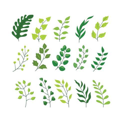 Colección de conjunto de elementos de diseñador de vector de helecho de bosque verde