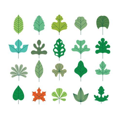 Vektorsatz schöne Blätter mit minimalistischer Art