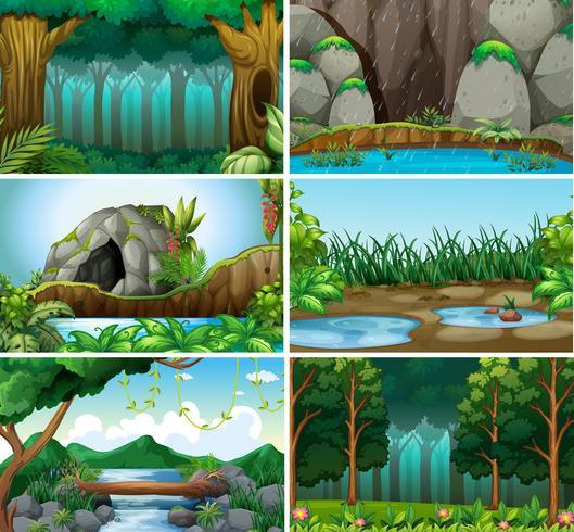 Set Waldhintergrund