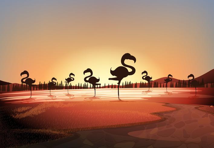 Silhouettieren Sie Szene mit den Flamingos, die im See stehen