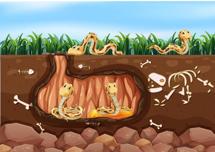 Een Snake Family Living Underground