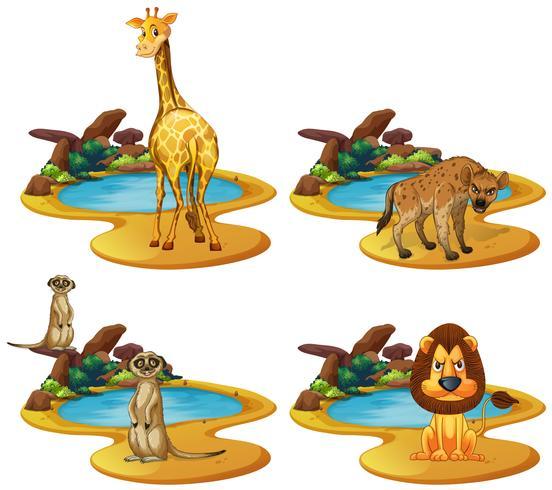 Fyra djurtyper vid dammen