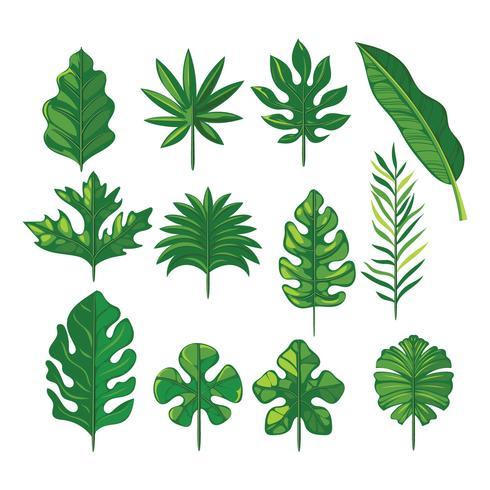 Vector conjunto de folhas tropicais