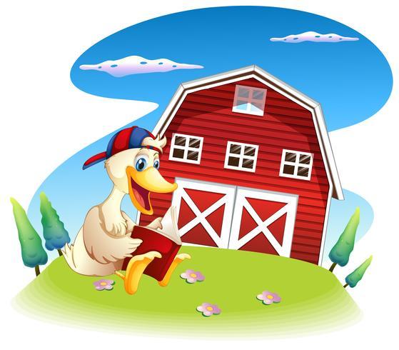 Een eendlezing in de buurt van het barnhouse