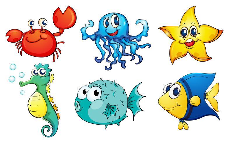 Las diferentes criaturas marinas.