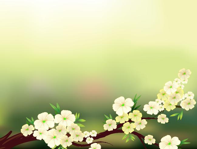 Ein Briefpapier mit frischen weißen Blumen
