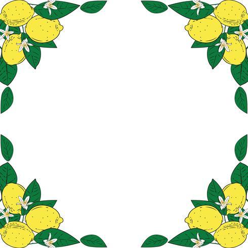 Tropical citrus lemon fruits with flowers frame. Summer colorful background. Vector illustration.