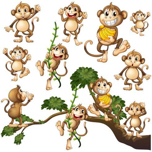 Monos salvajes en diferentes acciones.