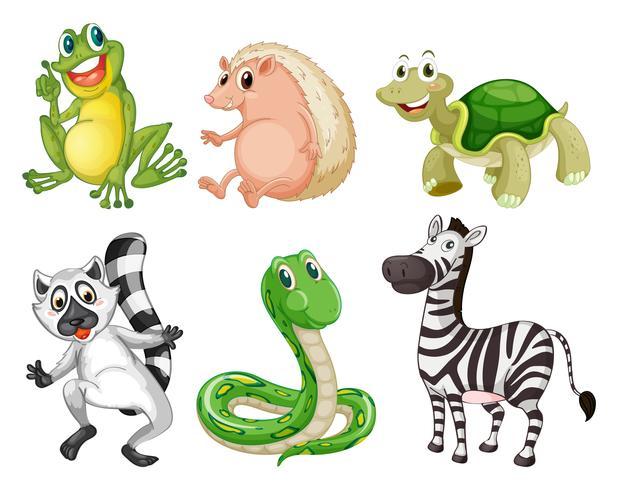 Diferentes especies de animales