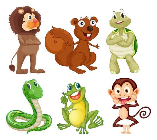 Seis diferentes tipos de animales en la selva.