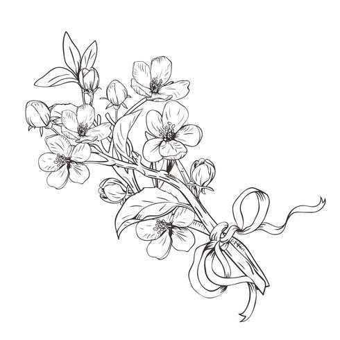 Árbol floreciente Dé el ramo botánico exhausto de las ramas del flor en el fondo blanco. Ilustración vectorial
